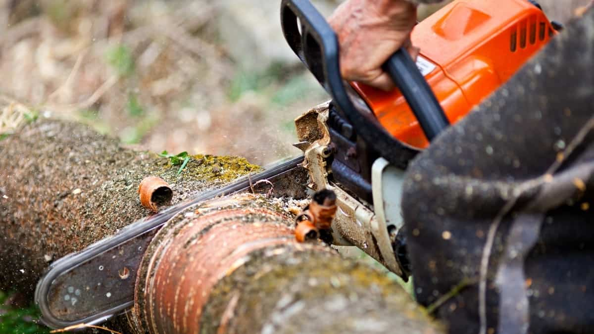 How to Hold Logs While Cutting With Chainsaw